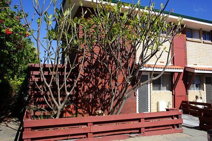 D1c8db79759fd5ab4d29d4b3 124 wms4398 cape street osborne park perth metro perth western australia australia 1518157437 primary