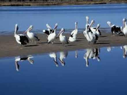 Pelicans 1530269483 thumbnail