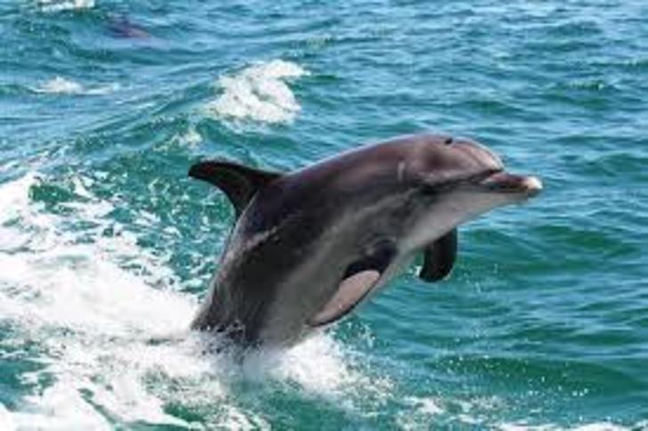 Dolphins 1530269483 primary