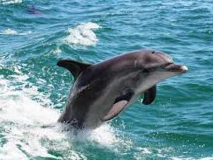 Dolphins 1530269483 thumbnail