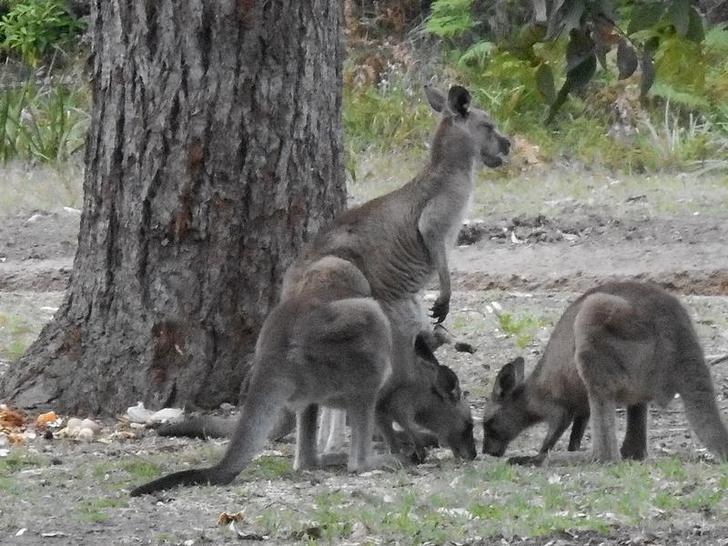 77 Berrara Road, Berrara 2540, NSW House Photo