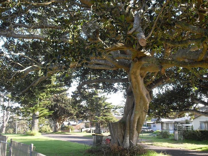 11 Jutland Avenue, Tuross Head 2537, NSW House Photo