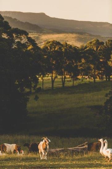 60A Borrowdale Close, Berry 2535, NSW Studio Photo