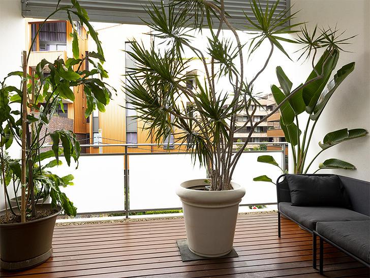 2317/8 Eve Street, Erskineville 2043, NSW Apartment Photo