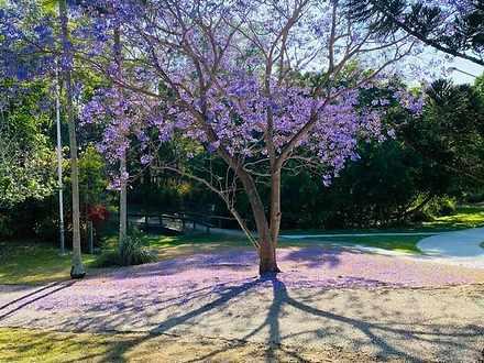 Tree 1612429991 thumbnail