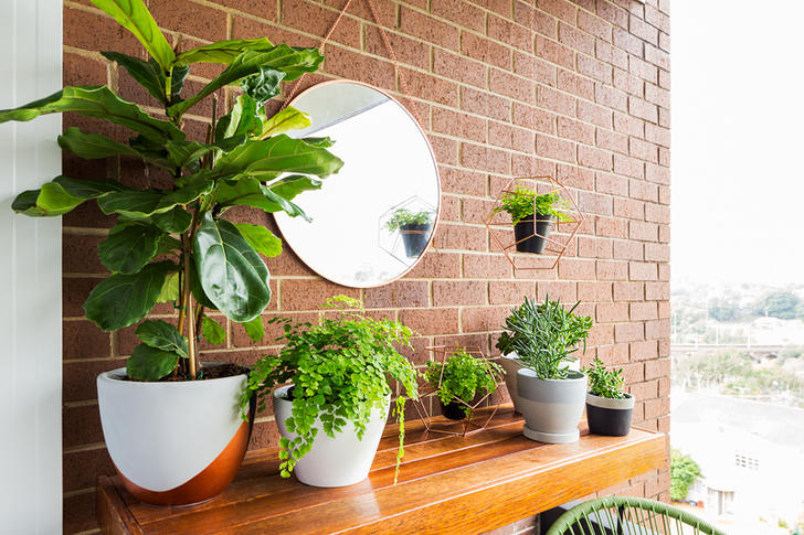 2/268 Johnston Street, Annandale 2038, NSW Apartment Photo